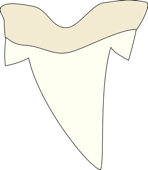 shark tooth by j alves a simple shark tooth drawing