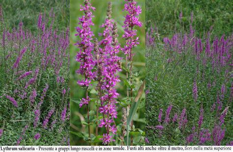 fiori ad agosto fiori ad agosto 3198 msyte idee e foto di