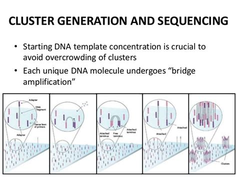 the templates for next generation sequencing are flash card clinical applications of next generation sequencing