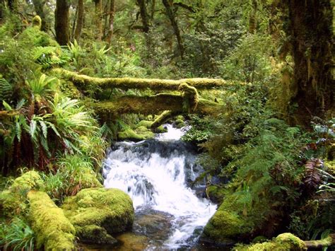 amazon nz fiordland rainforest new zealand trer