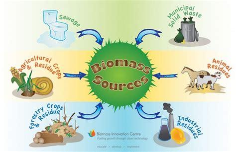 contoh biomassa apa itu energi biomassa definisi dan 4 contohnya