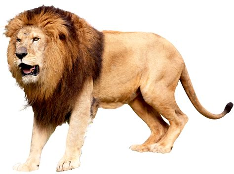 Of Lions pics for gt png