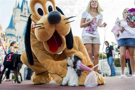 dogs at disney world disney world dogs now welcome at four hotels orlando tickets hotels packages