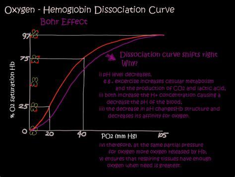 bohr effect diagram bohr diagram for carbon periodic table for carbon