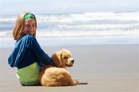 dog friendly beach house the top 4 pet friendly vacations texas alliance for homeless pets