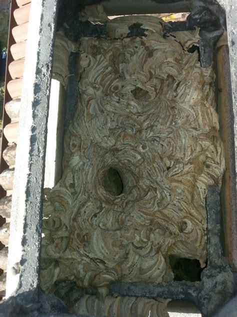 calabroni nel camino foto nido di calabroni nel camino di moz 408369