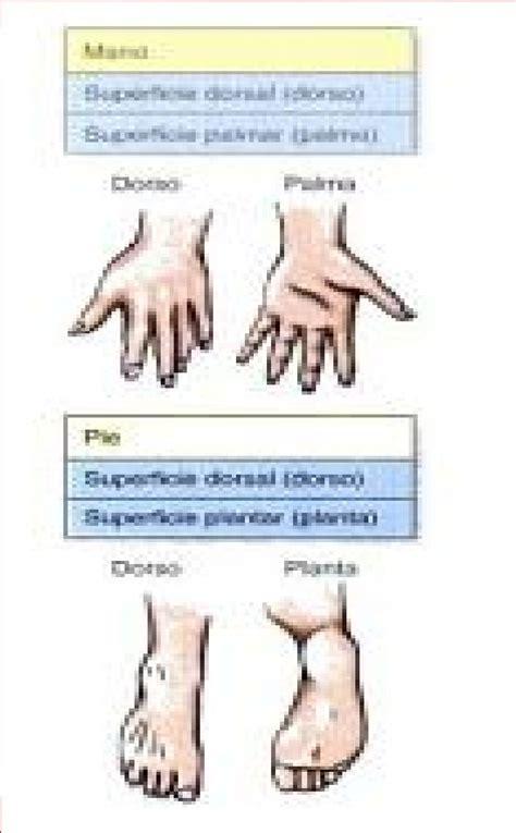 Ventral Foot Anatomy