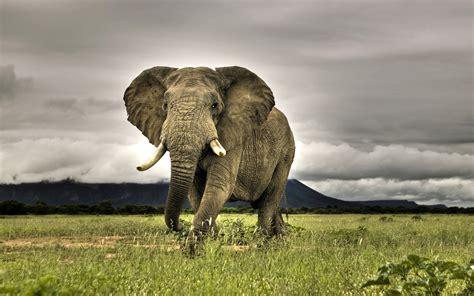 elephant wallpaper for pc animals zoo park elephant wallpapers for desktop