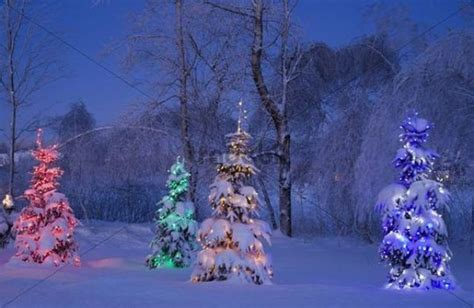 snowy christmas trees winter canada download abstract