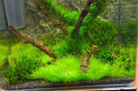 lade per piante lade per nano acquari lade per nano acquari immagine