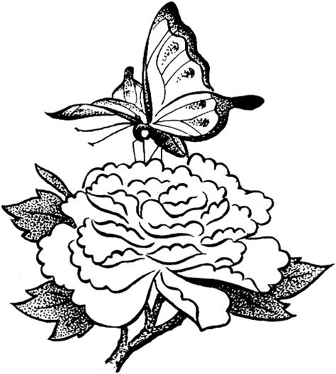 Outline Of Flowers And Butterflies by Outline Of A Butterfly And Flowers Clipart Best