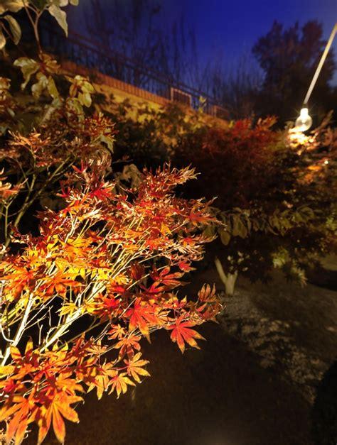 illuminazione bologna illuminazione giardino naturalistico bologna