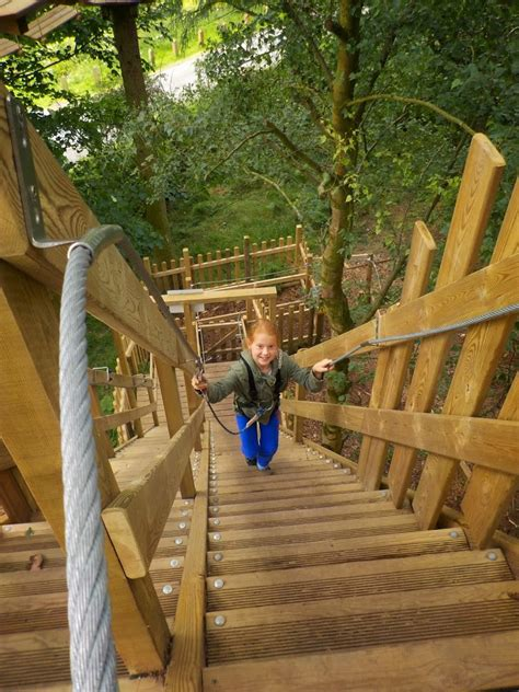 tree top junior  ape  dalby forest north yorkshire