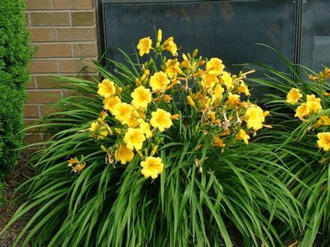 the beautyfull landscape plants for california gardens