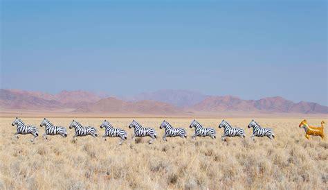 gray malin photography gray malin a balloon animal safari in namibia