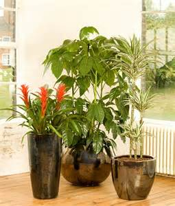 Interior Flower Pots by Placed In Indoor Plant Pots To Add Of Any