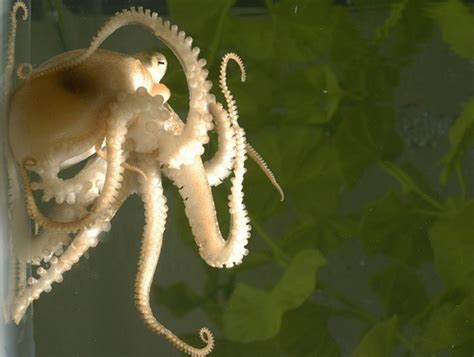 Scientists Think Octopuses 'Might Be Aliens' After DNA ... Groupings Of Animals