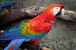 macaw colors sciencefieldnotebooks parrot dina gelement