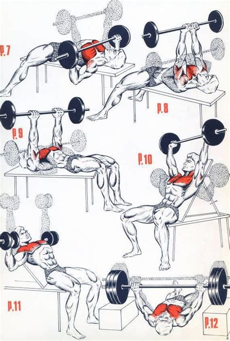 chest workout for mass and building tips g 246 g 252 s