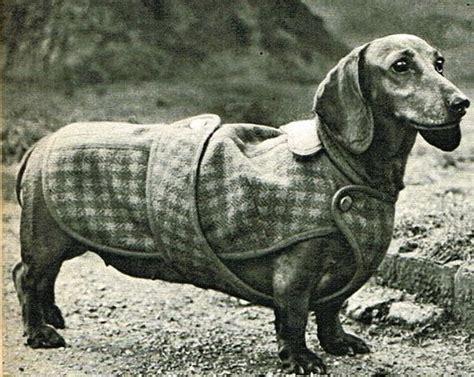 pattern for dachshund dog coat vintage stylish dachshund weiner dog coat sewing pattern
