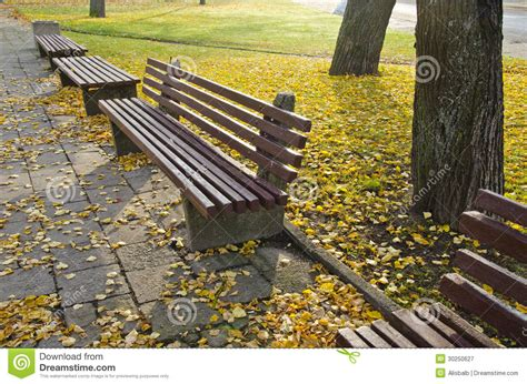 bench tree group bench group in autumn park royalty free stock photography