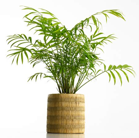 best office plant the 6 best plants for a healthy office the loszach blog