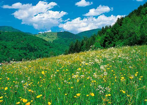 imagenes de verdes praderas vinilos de paisajes pradera viniliza