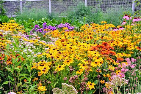 flower cutting garden july blooms in my cutting garden the martha stewart