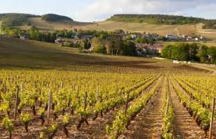 bourgogne actualit 233 vigne et vin bourgogne