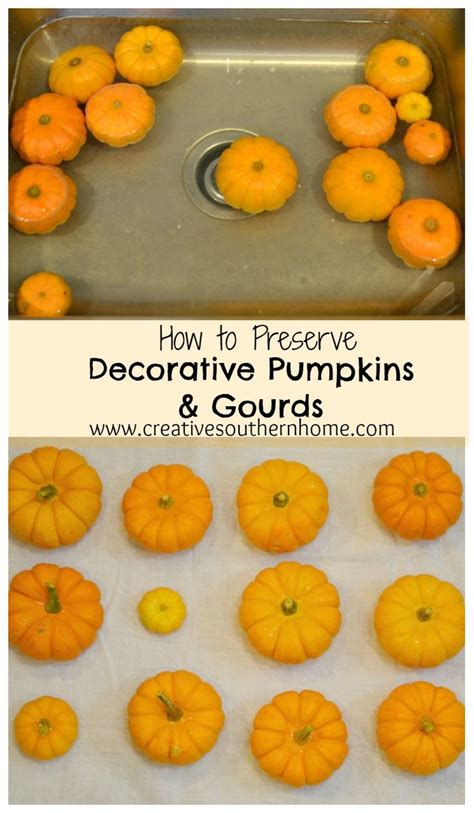 whole pumpkin preservation best 25 how to preserve pumpkins ideas on preserve carved pumpkin how to carve
