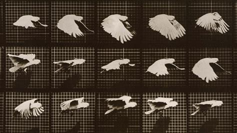 Built In Desk Ideas Muybridge The Man Who Made Pictures Move Npr
