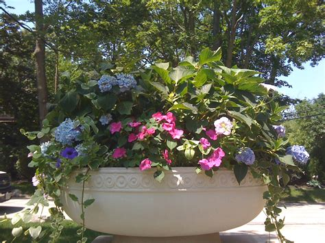 start thinking about spring flower containers