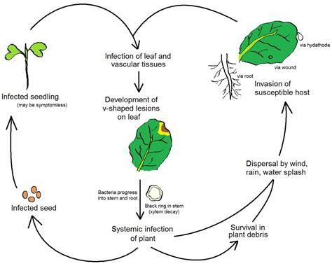 life processes simple english wikipedia the free plant pathology wikipedia