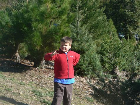 cut christmas tree san diego choose and cut tree farms in san diego ca trekaroo