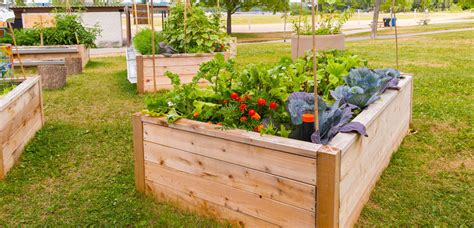 Raised Vegetable Beds Vegetable Beds Raised Garden Raised Vegetable Garden Beds For Sale