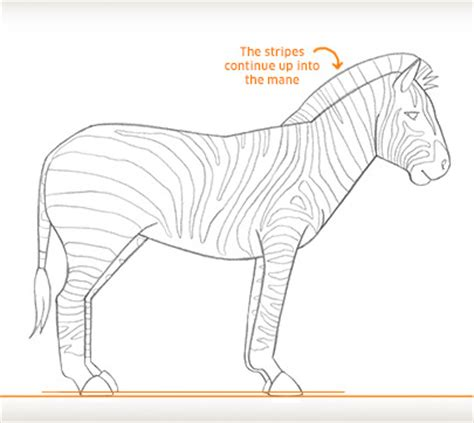 doodle how to add times time for stripes how to draw a zebra drawing zebra add