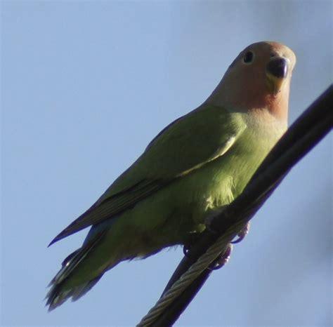 tentang burung di indonesia gambar burung bird