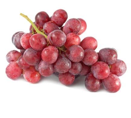 tanaman anggur merah lokal bibitbungacom