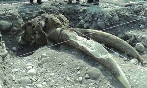 Fosil Kayu Purba fosil purbakala ditemukan di desa karangmalang kabupaten
