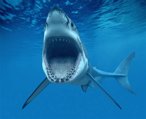 Great White Shark Longevity [Life Lines] Science and