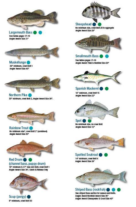 va boating license answers fish identification maryland fishing regulations 2018