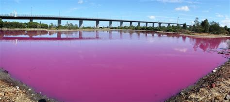 pink lake melbourne pink lake in melbourne