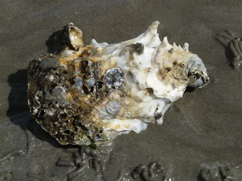 Oyster Health oyster health threatened by microplastics plastic soup foundation