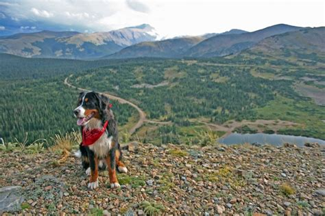 best hiking dogs 15 best breeds for hiking buddies page 2 of 16 outwardon