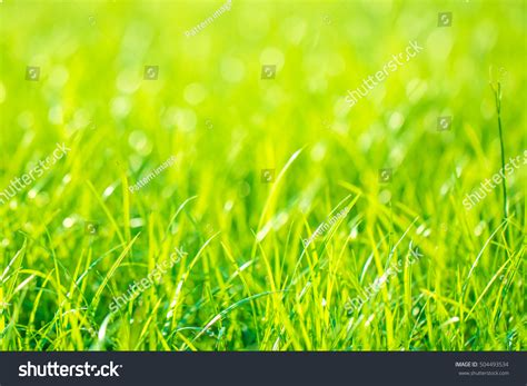 wallpaper abstract grass abstract natural backgrounds grass stock photo 504493534