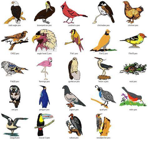 Types of birds weneedfun