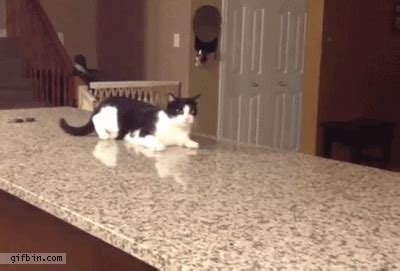 how to stop your cat jumping on counters and tables how to stop your cat from jumping up on the kitchen