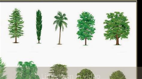 type of tree types of common trees youtube