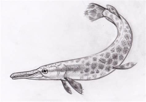 gar fish coloring pages 82 alligator gar coloring page alligator gar