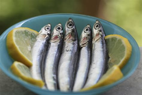 cucinare tonnetto intero cos 232 e come cucinare il pesce azzurro